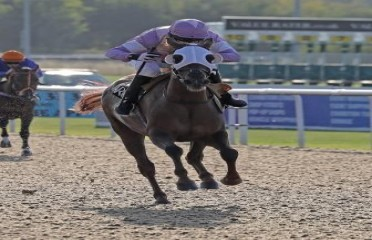 Arabianraceform.co.uk Supports Grass Roots Racing Handicap Stakes