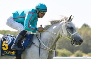 Arabhästlöpning