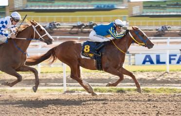 Scandinavian Arabian Racing